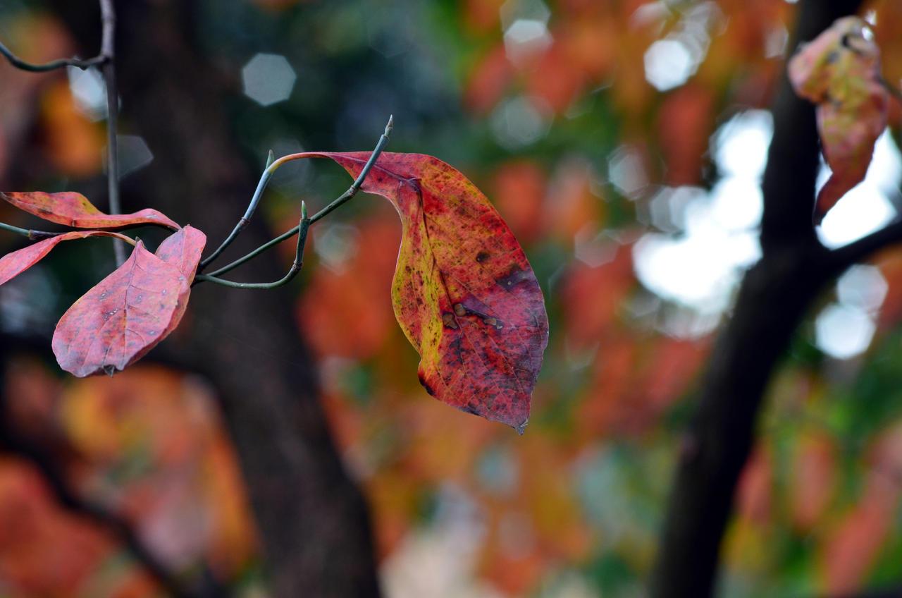 5 Leaves by coffeenoir