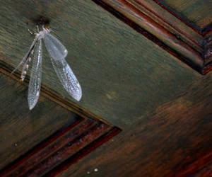 Dragonfly 4 by coffeenoir