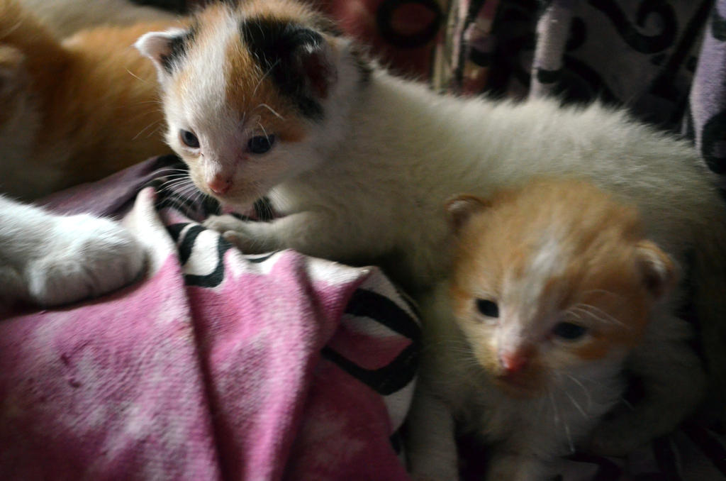 Little Kittens by coffeenoir