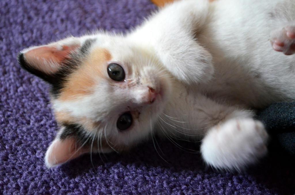 Cutie Pye by coffeenoir