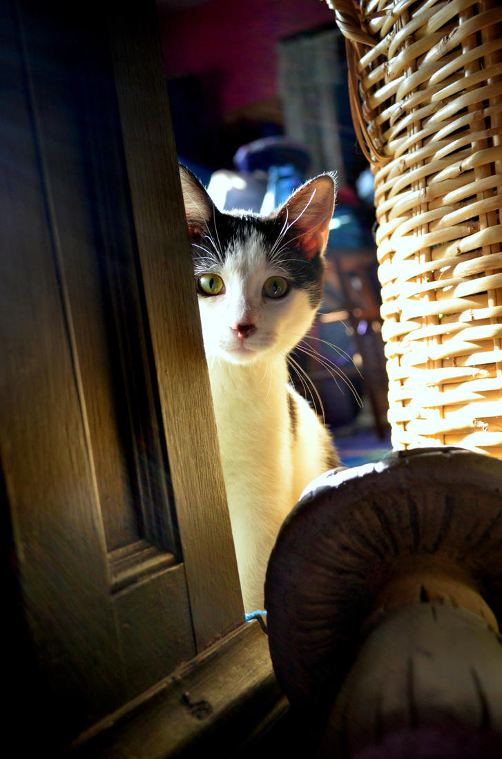 Curious Atticus by coffeenoir