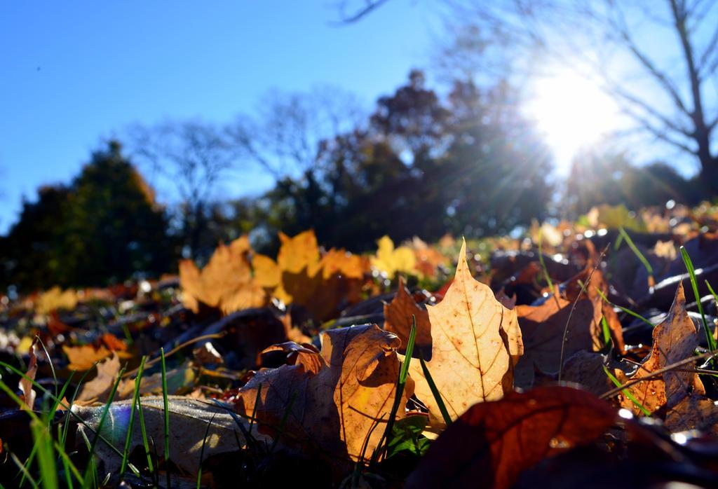 November in Ohio by coffeenoir