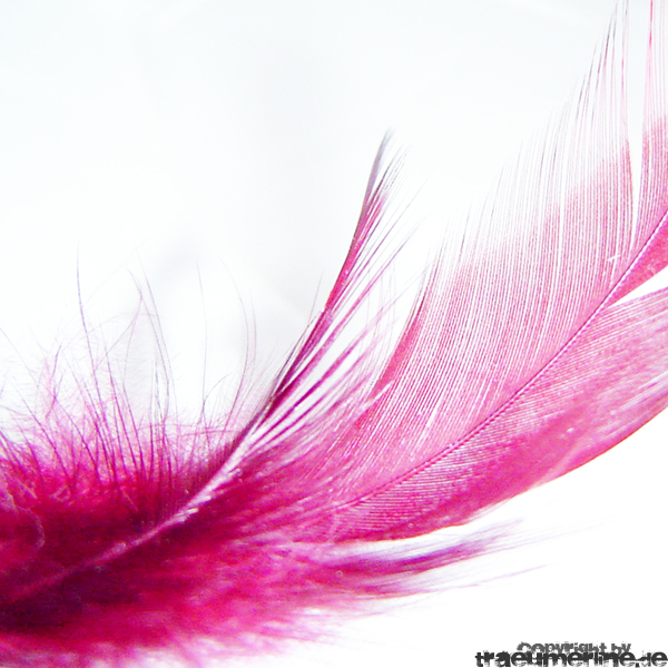 feather I by happyline