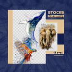 +Pack stock png animals