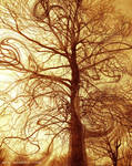 Treellusion