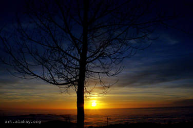 Tree Silhouette by alahay