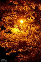 Autumnal Orange by alahay