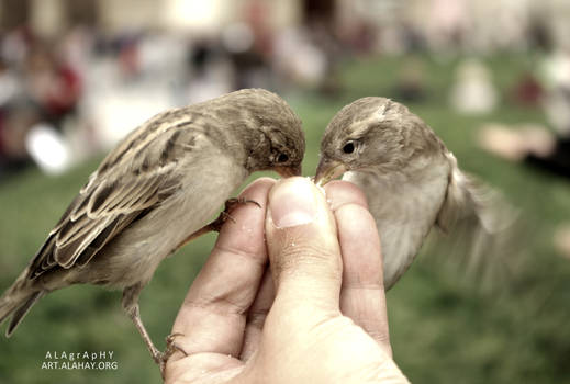 Bird feeding while starving