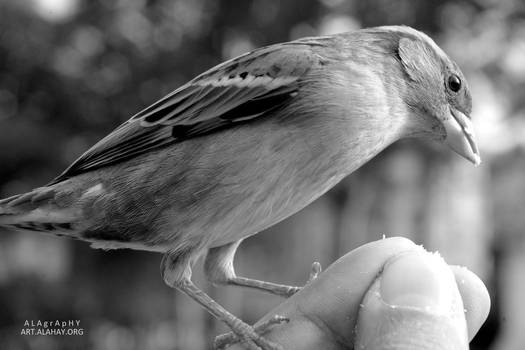 Mon ami l'oiseau