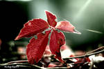 Between Life, Leaf and Leave