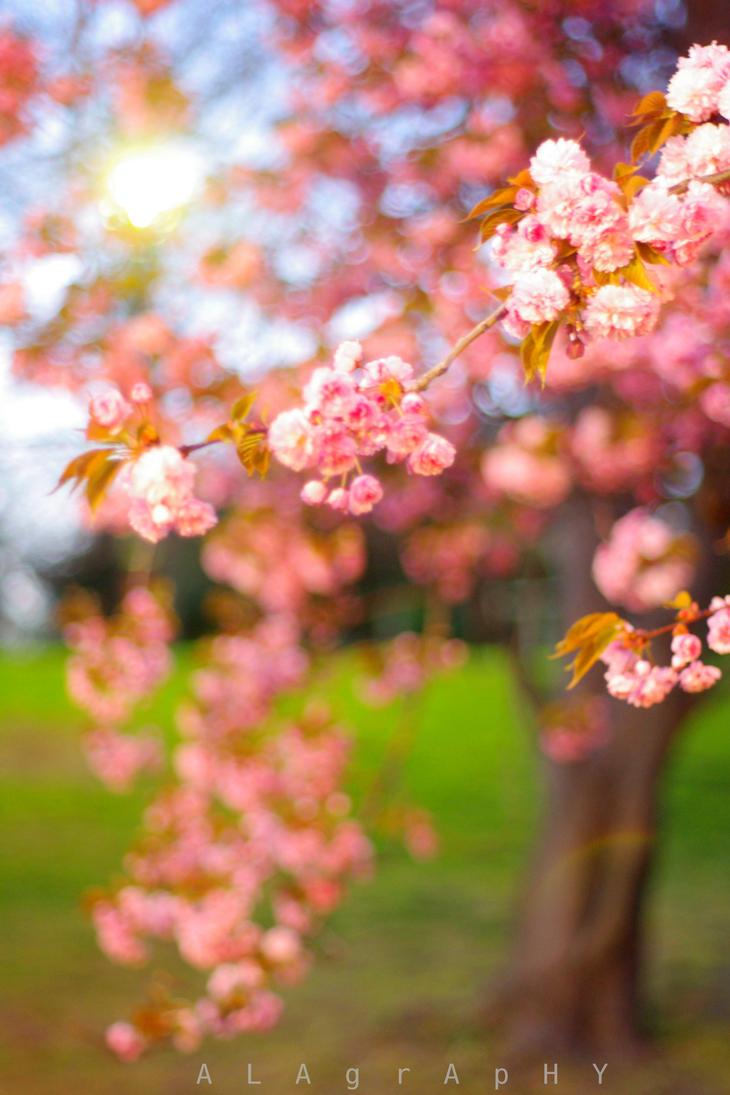 Primavera by alahay