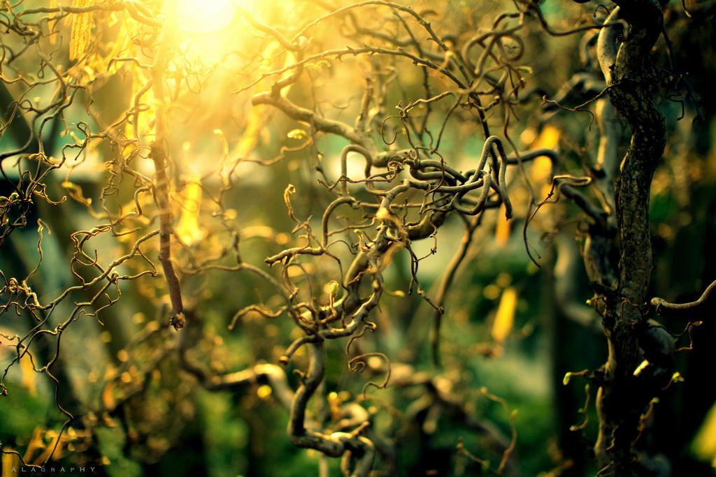 Spring Light by alahay