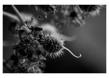 Spiky by YUMEK0N