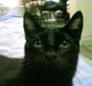 F-Adan's Profile Picture