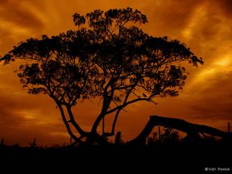 Firetree by ipawluk