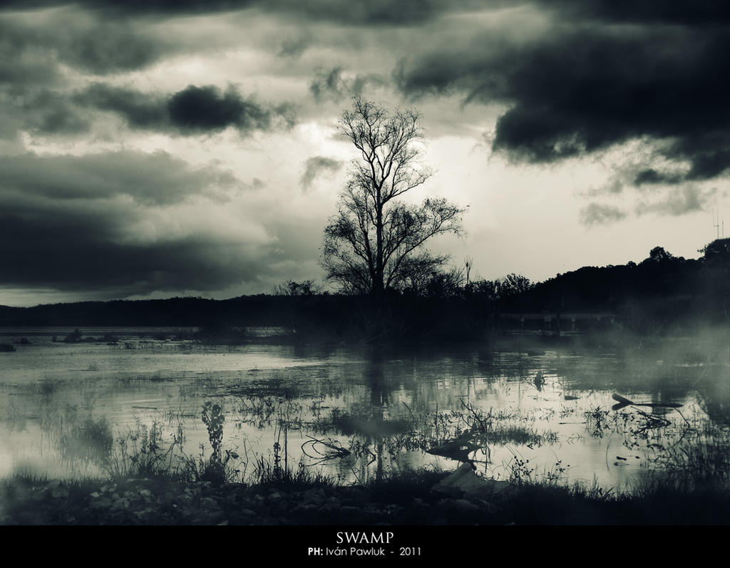 Swamp - Pantano by ipawluk