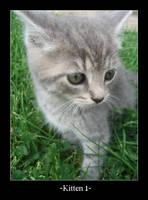 -+-Kitten 1-+- by mbqlovesottawa
