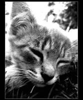 Sleepy Kitty Cat by mbqlovesottawa