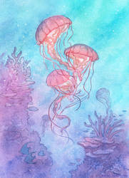 Drifting Among Corals