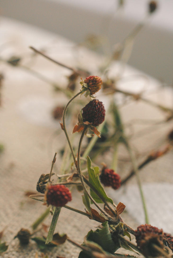 Dried summer. by Akatamy