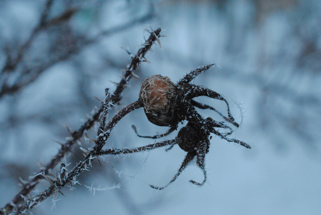 Frosted thorns. by Akatamy
