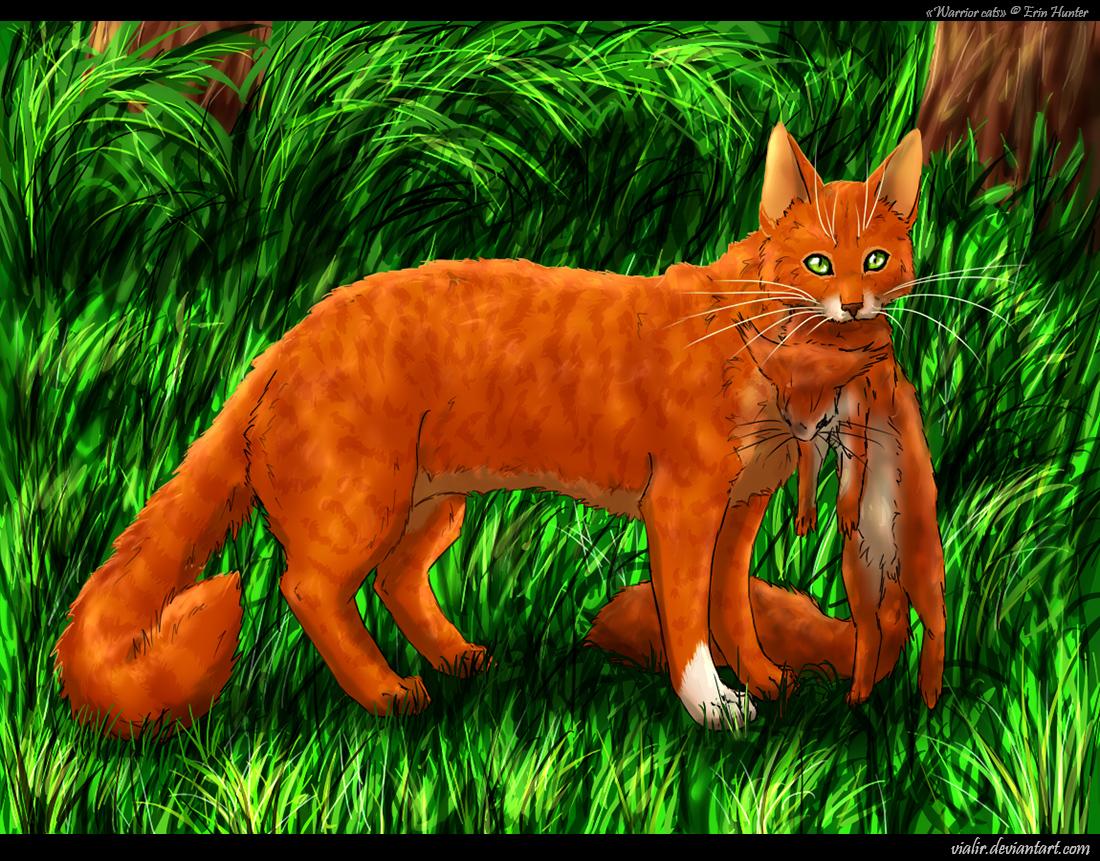 Výsledek obrázku pro warriors cats squirrelflight