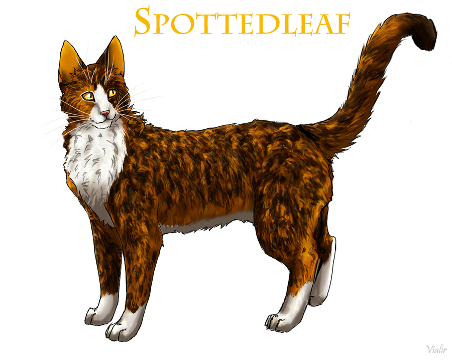 Spottedleaf by Vialir on DeviantArt Tabby Cat Cartoon Drawing