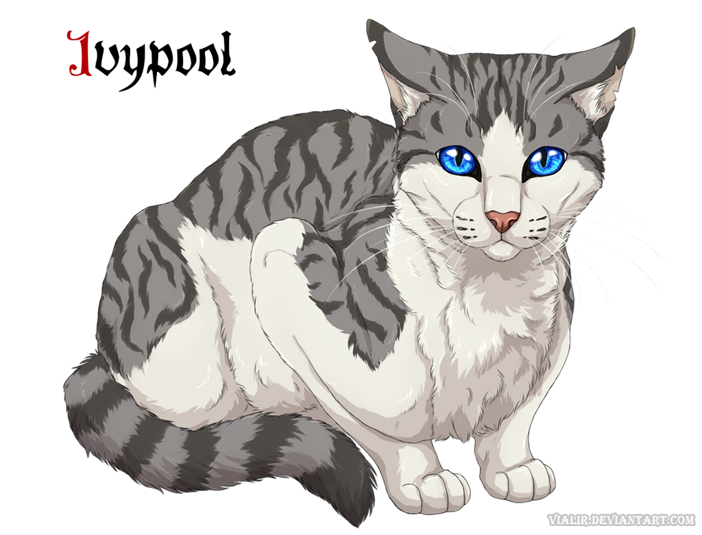 warrior cats ivypool