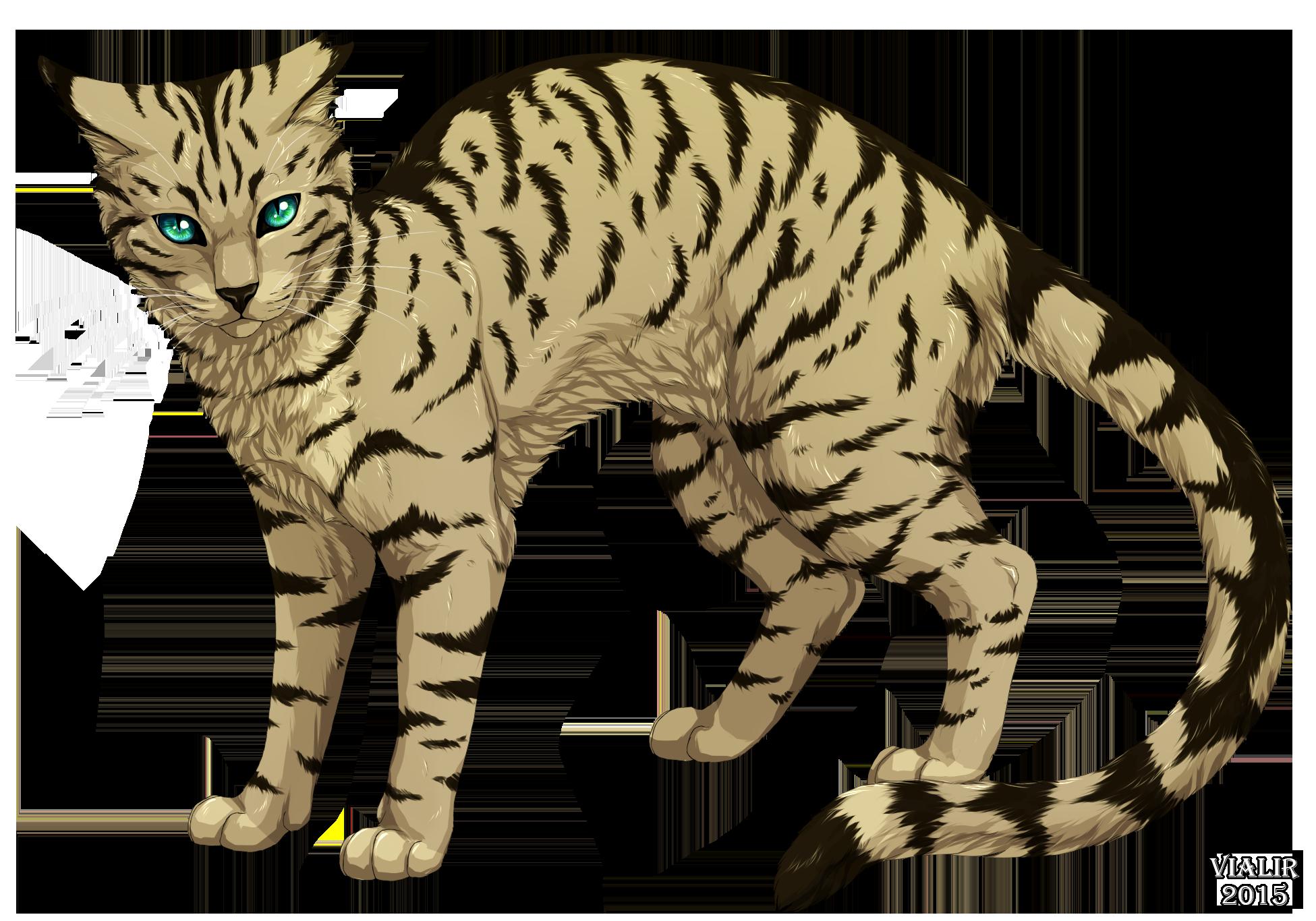 Výsledek obrázku pro warriors cats longtail