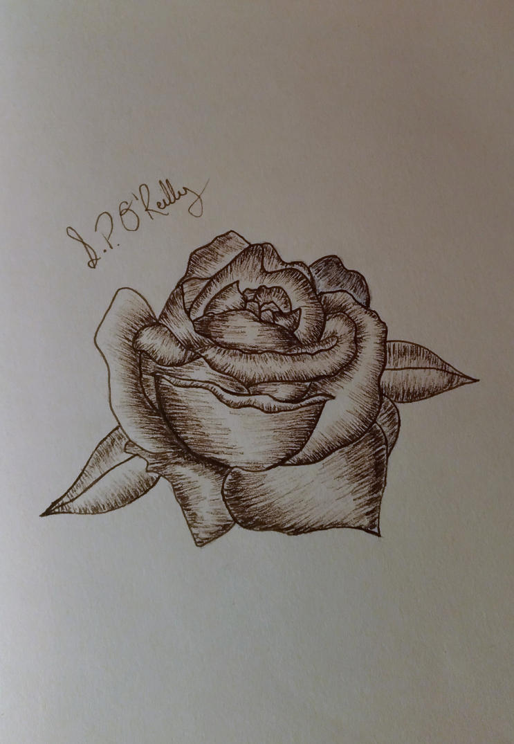 Rose Sketch by Sone28