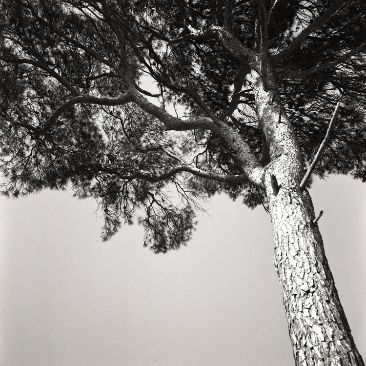 Pine by JER0ME-B