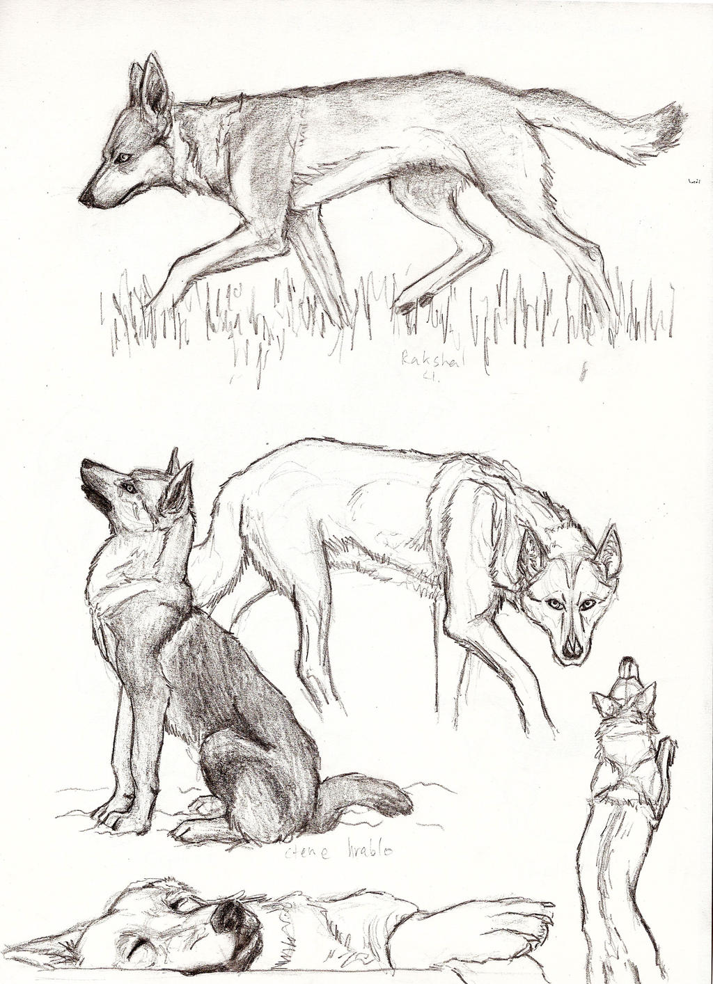 Wolfy sketches