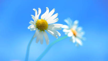 Windows 8 RTM flower wallpaper