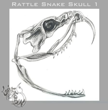Rattle snake skull 1 by grifforik on deviantart rattle snake skull 1 by grifforik thecheapjerseys Choice Image