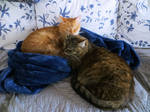 Cats on the Couch