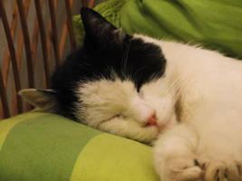 Sepp Sleeping Again