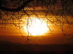 Branches and a Wonderful Sunset (2)