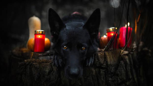 Happy Halloween 2014 - Werewolf Pepper