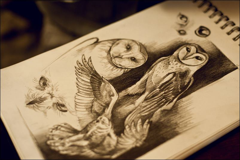 Owls_01 by oione