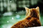 Snowed Cat