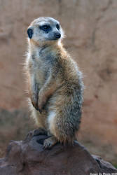 Suricate by TheoGoth