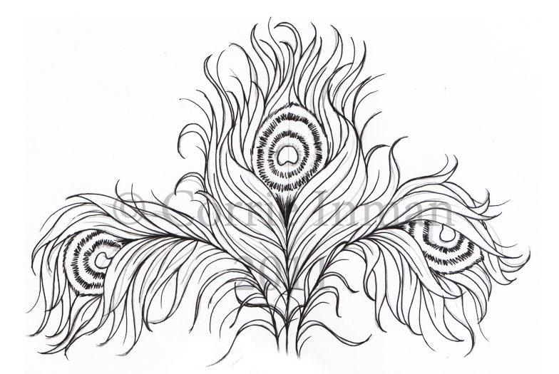 Peacock feather drawing tattoo - photo#10