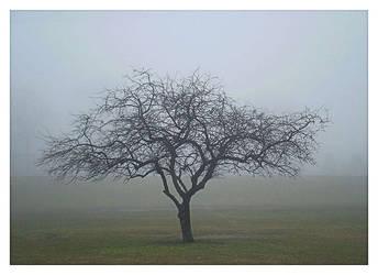 Fogged Tree by PhotographChik