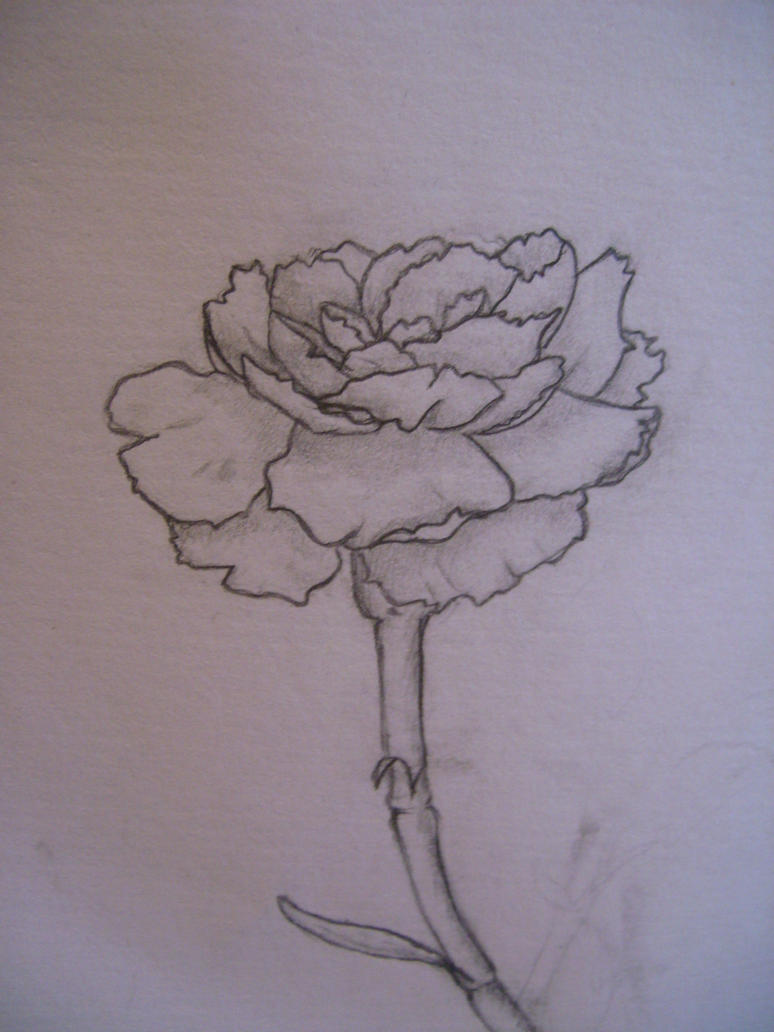 Pretty Flower Drawings Pretty flower sketch by