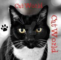 Catworld2 by suezn