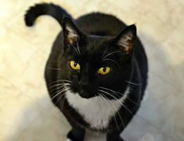 I See Cat Food by suezn