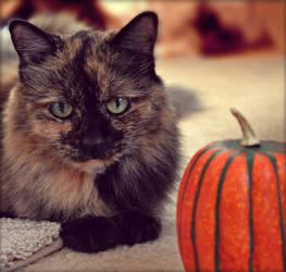 My Lil Pumpkins by suezn