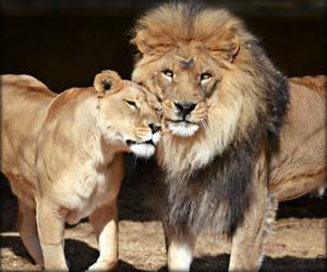 Lion Heart by suezn