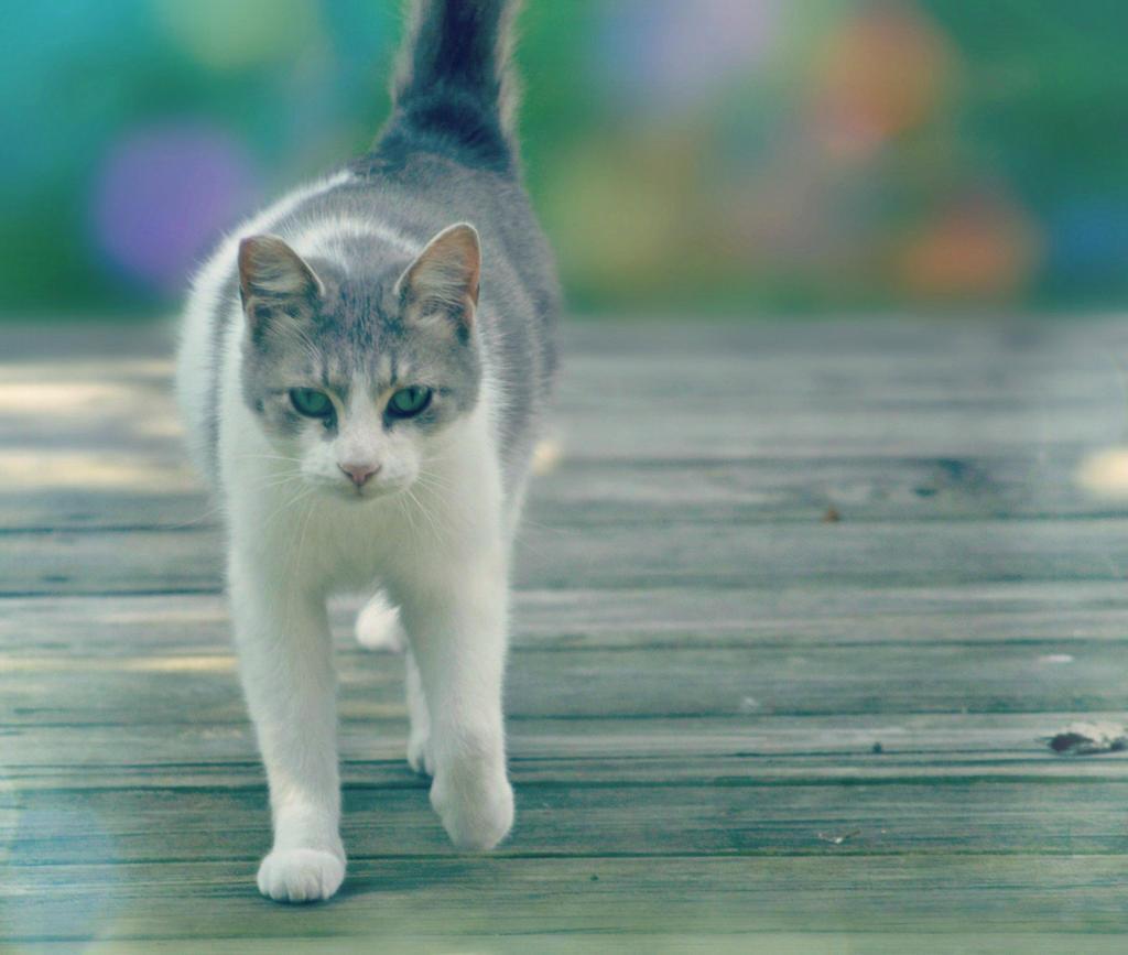 C'mere Sweet Kitten by suezn