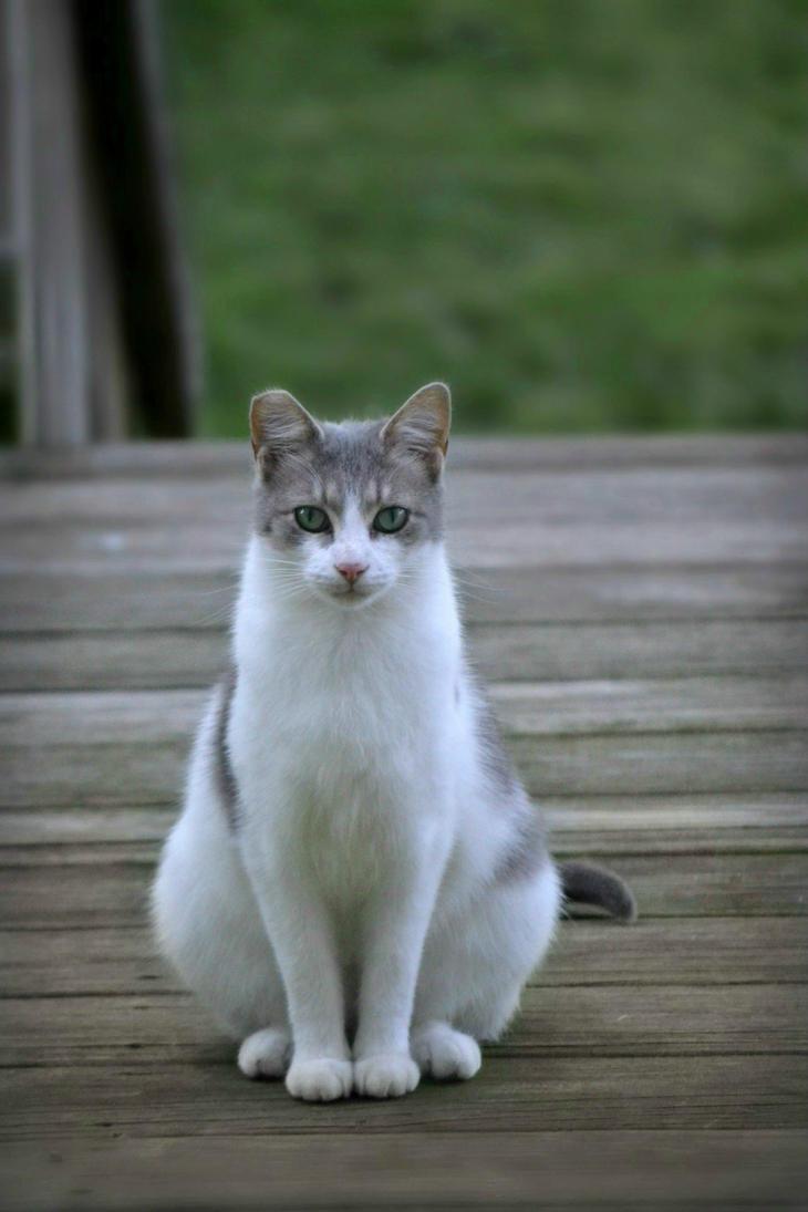 Pretty Kitty by suezn
